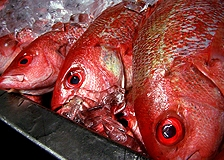 Red Snapper | Indonesisch-Culinair.nl